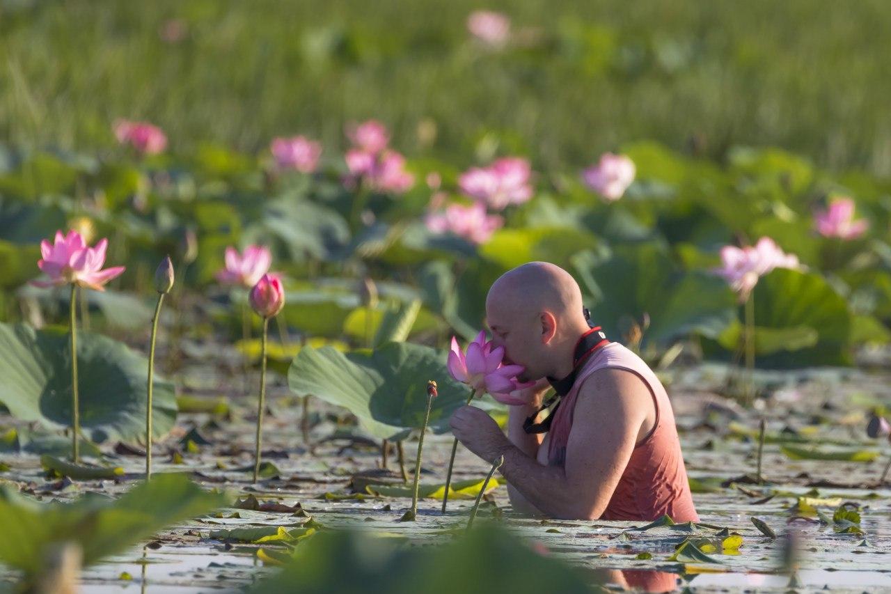 Нежный цветок лотоса