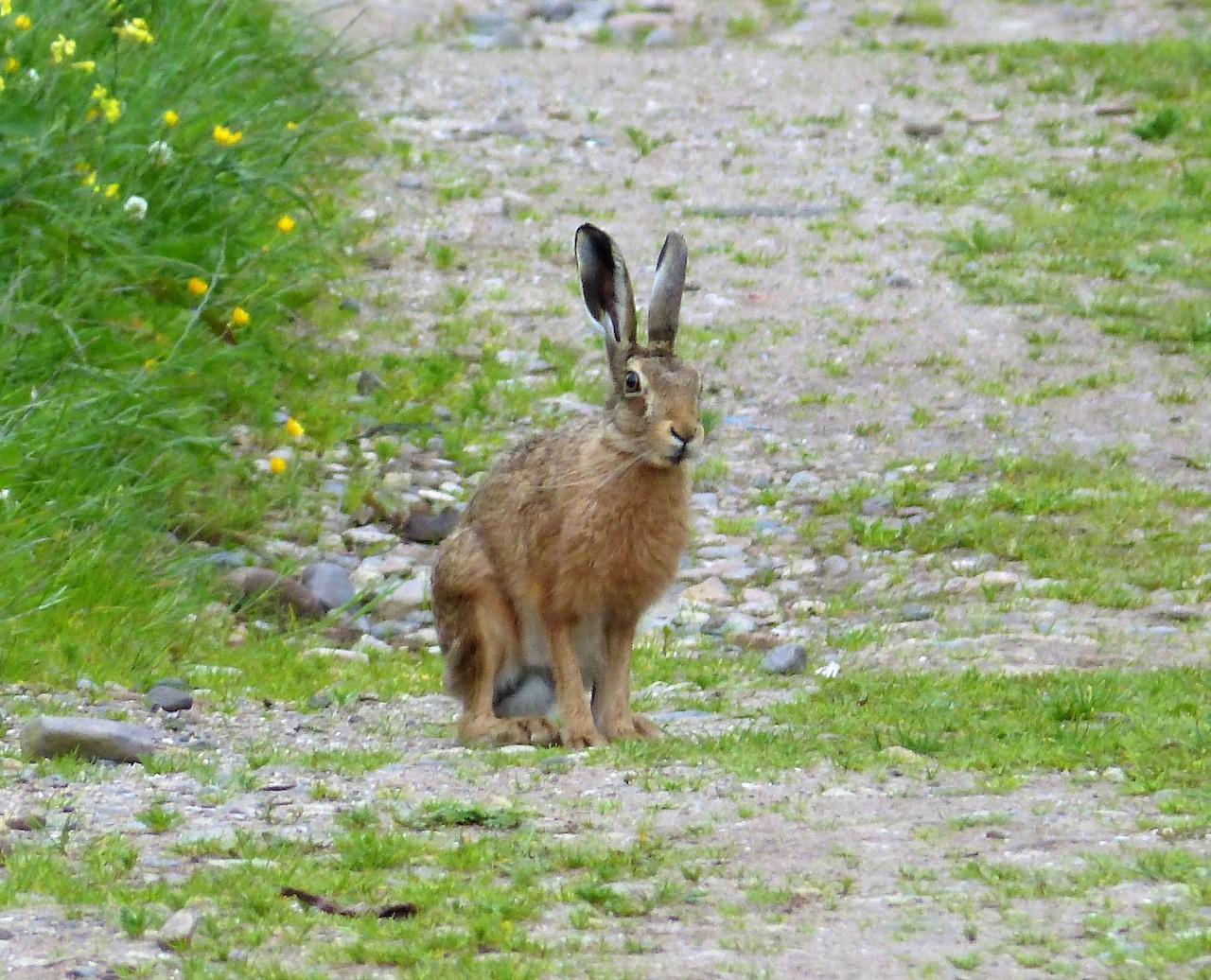 Враги зайца-русака