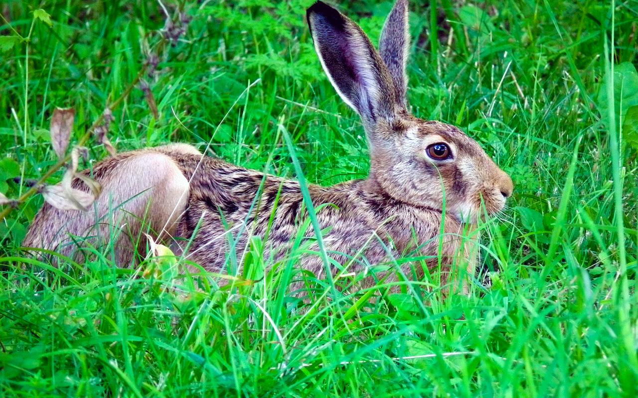 сейчас покажите мне зайца -беляка и зайца-русака картинки хранения скоропортящихся продуктов
