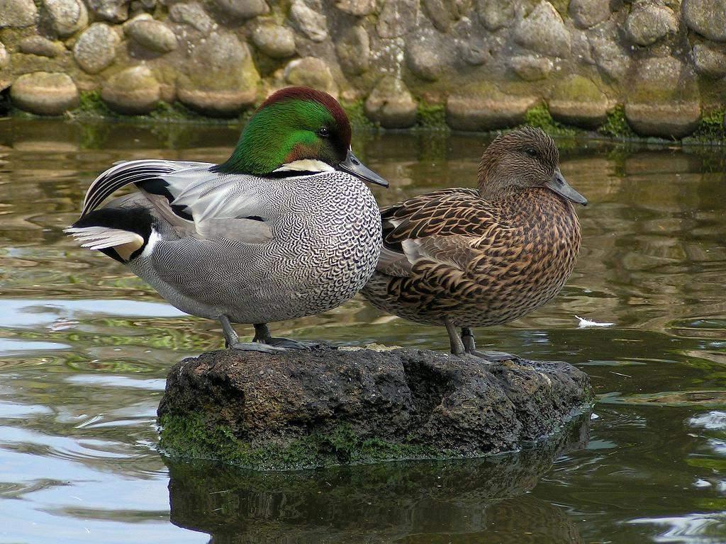 Среда обитания птицы касатки