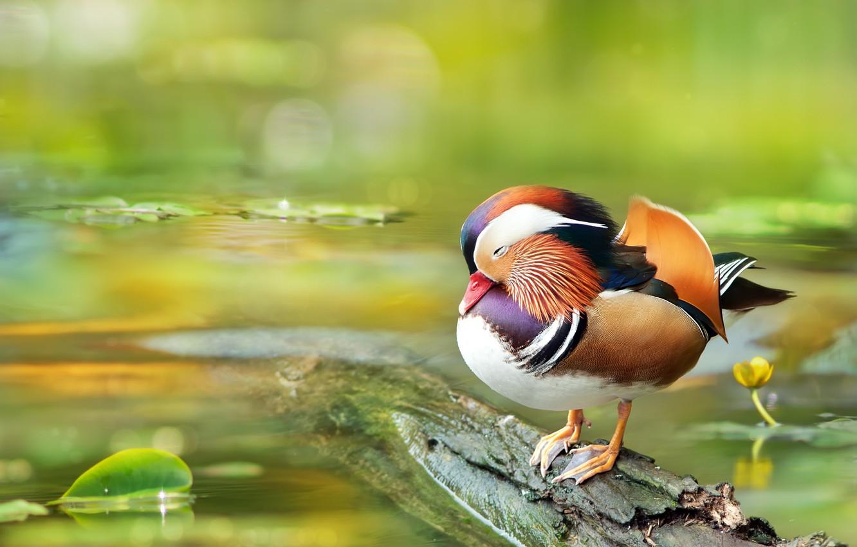 Питание птички мандаринки
