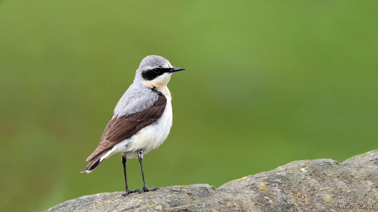 Каменка Птицы Крыма