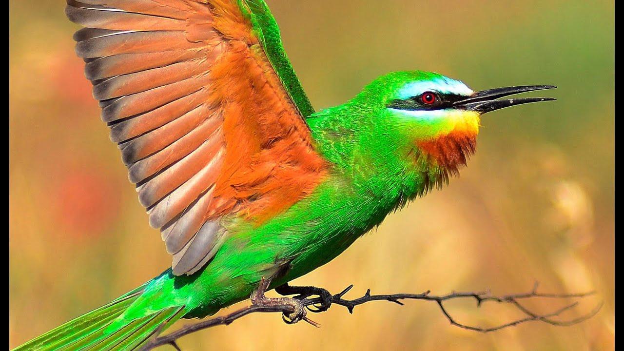 Зеленая щурка Птицы Харькова